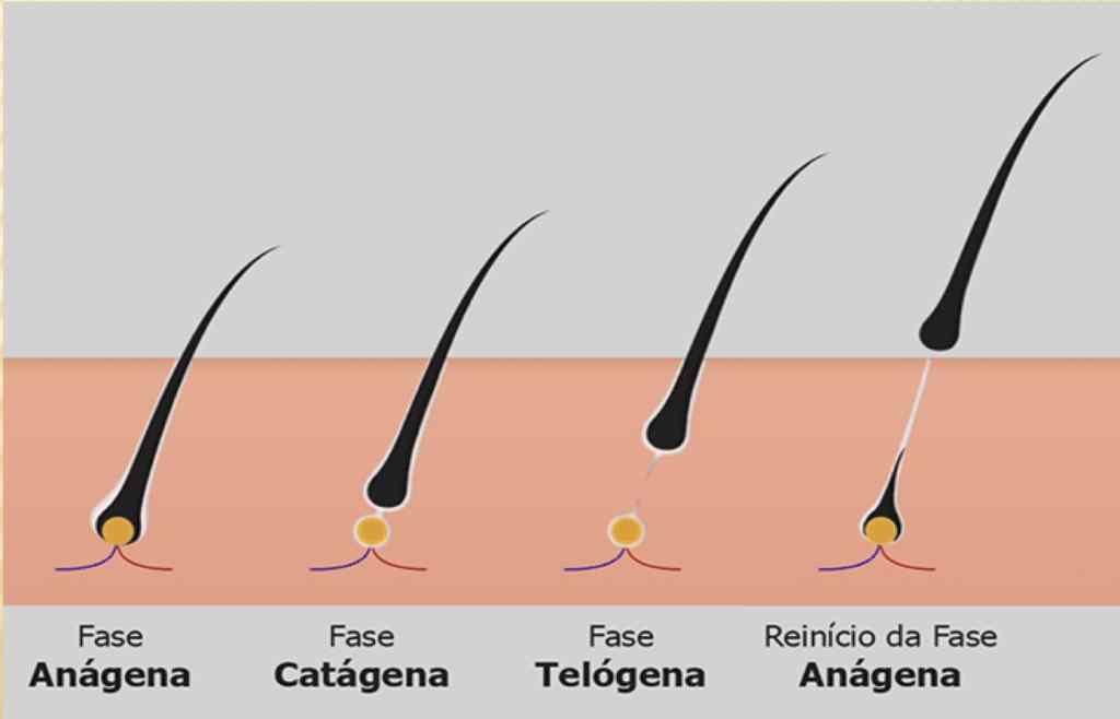 fases do pelo - depilação a laser